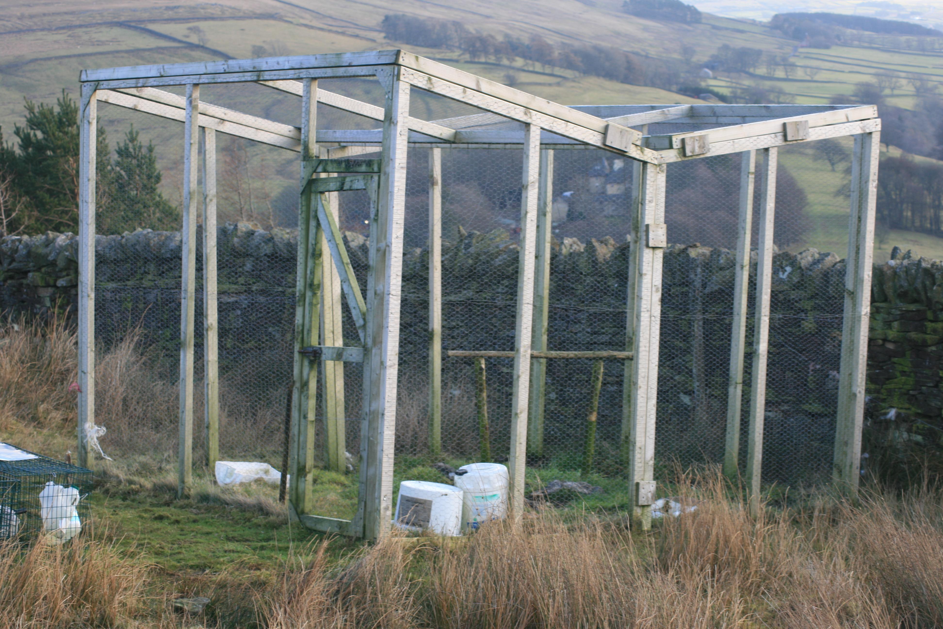 Notice Board: the Honey-buzzard Season in Northumberland 2010 as it ...